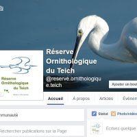 la réserve ornithologique du teich est sur facebook
