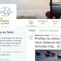 la réserve ornithologique du teich est sur twitter