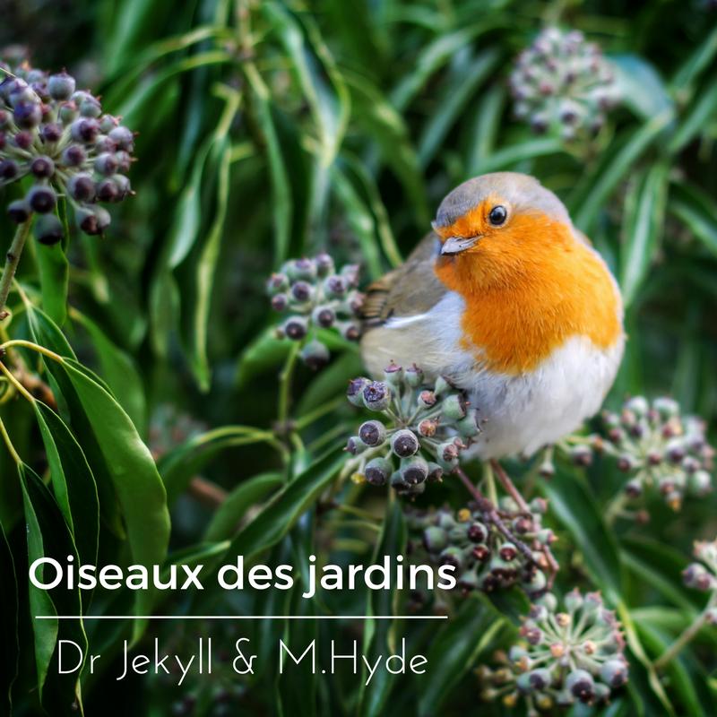 L'étonnant comportement des oiseaux des jardins