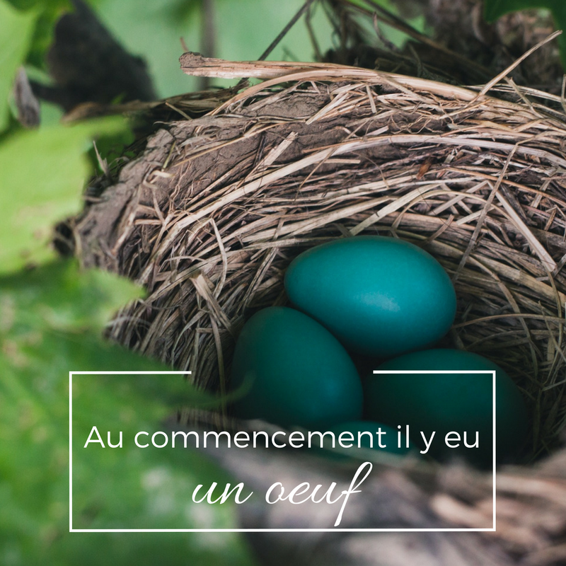 La ponte des œufs chez les oiseaux