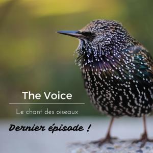 Dernier épisode sur le chant des oiseaux