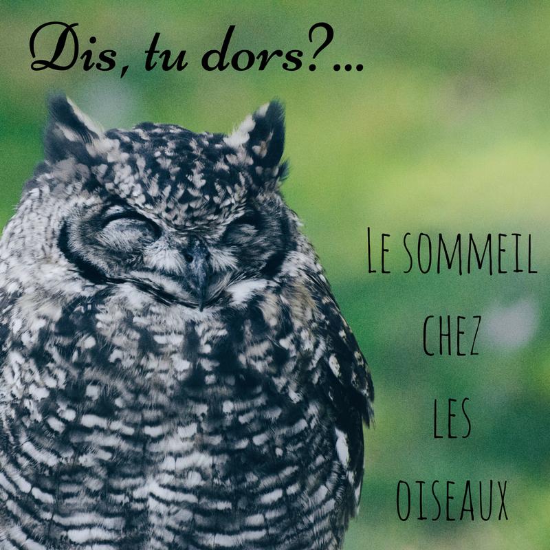 Comment dorment les oiseaux - le sommeil chez les oiseaux