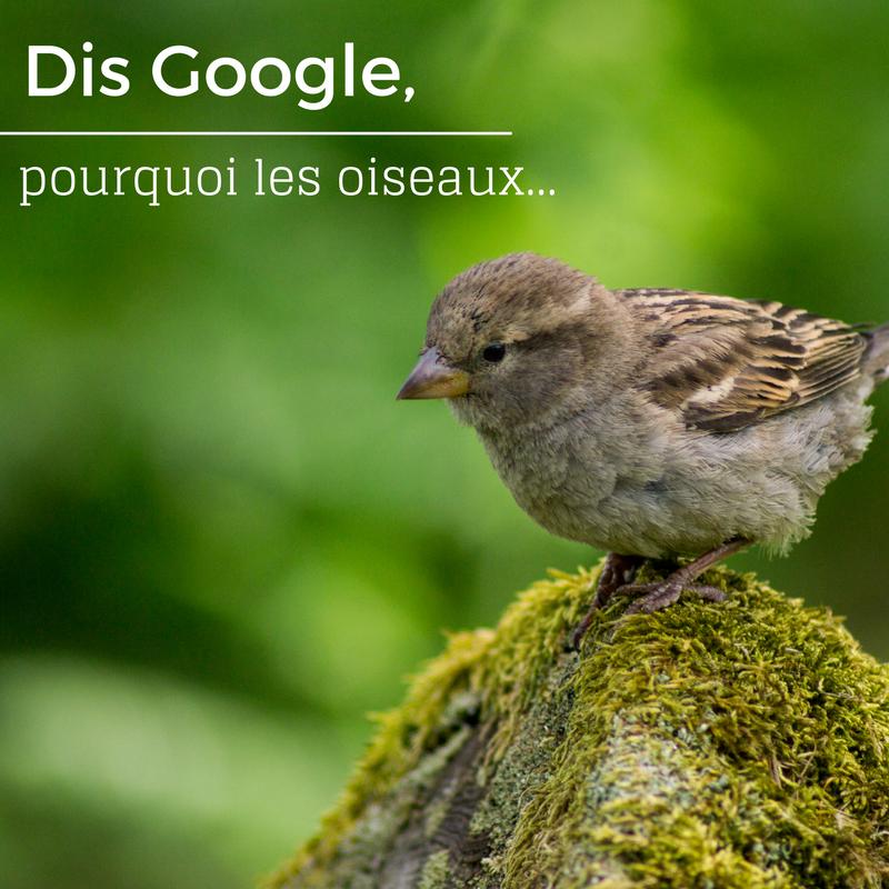 Dis Google, pourquoi les oiseaux