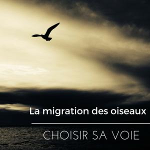 La migration des oiseaux - comment les oiseaux choisissent leurs routes