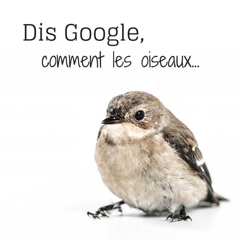 Dis Google comment les oiseaux...