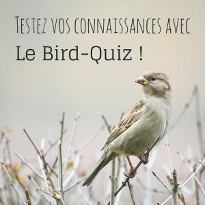 Testez vos connaissances sur les oiseaux avec notre quiz
