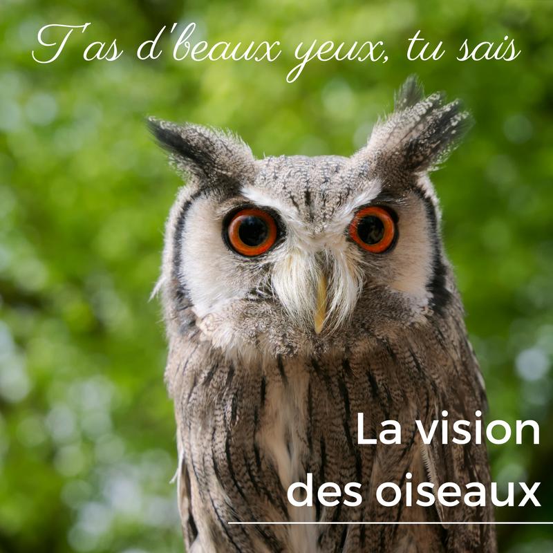 Comment voient les oiseaux? Comment fonctionnent leurs yeux?