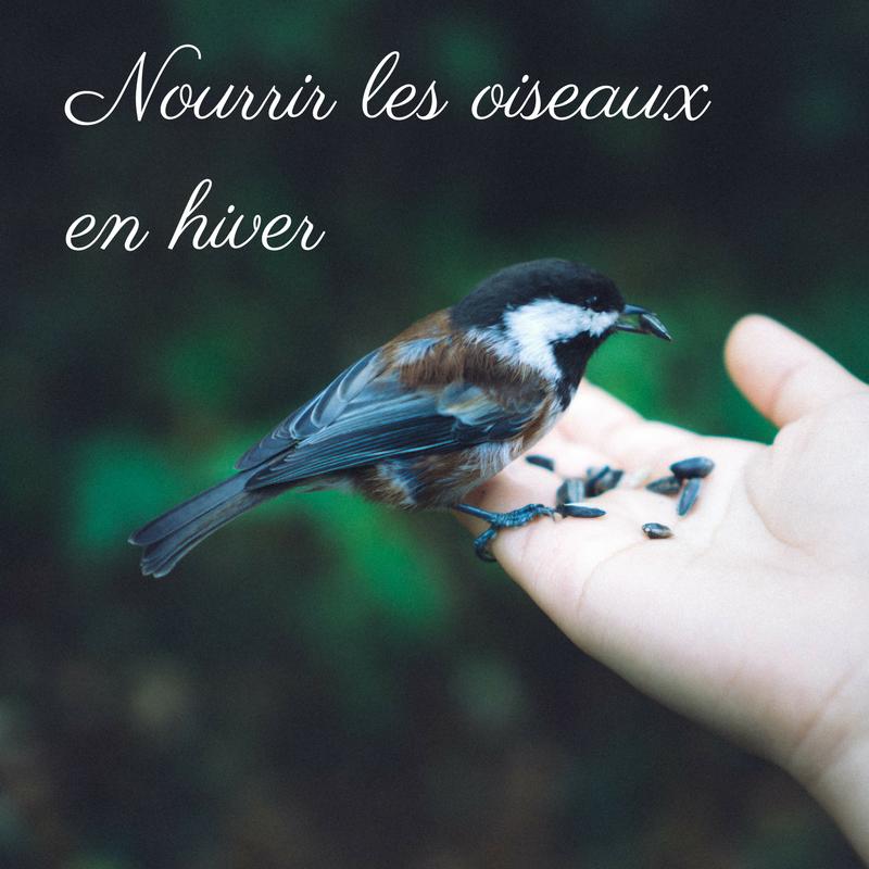 Pourquoi et comment peut-on nourrir les oiseaux durant l'hiver?