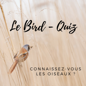 Testez vos connaissances sur les oiseaux grâce à notre questionnaire!