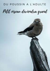 Téléchargez gratuitement l'hibook d'Une histoire de plumes sur les oiseaux: du poussin à l'adulte