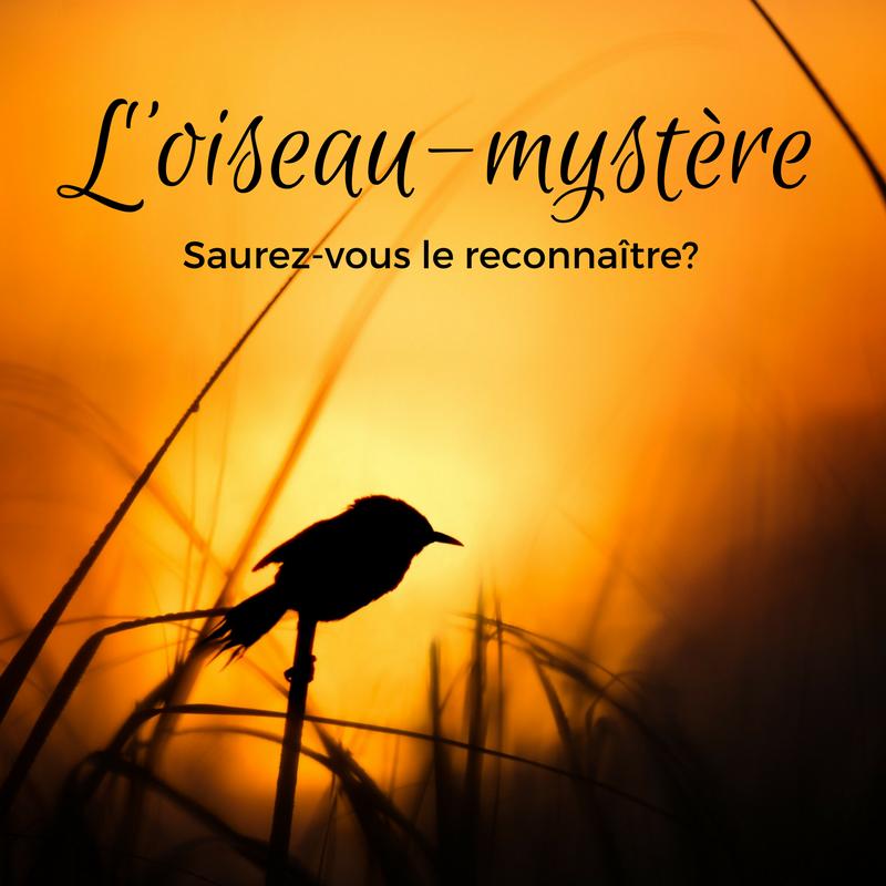 L'oiseau mystère, deuxième épisode! Saurez-vous le reconnaître?