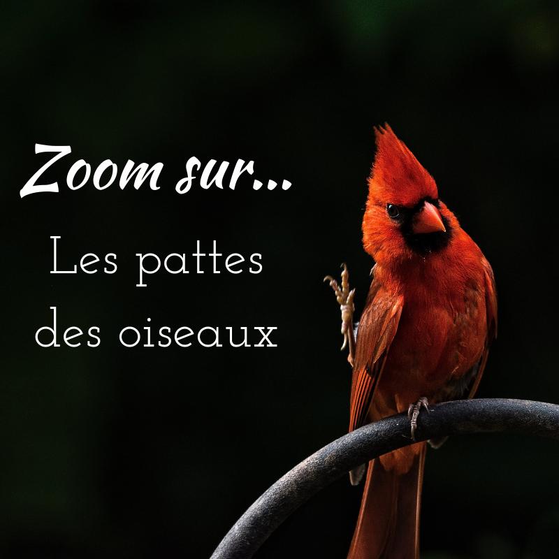 Découvrez les pattes des oiseaux grâce à notre article sur le bird-blog