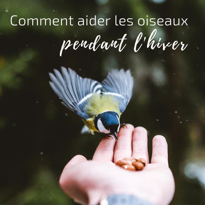 Nouvel article du bird-blog d'une histoire de plumes: apprenez comment aider les oiseaux pendant l'hiver