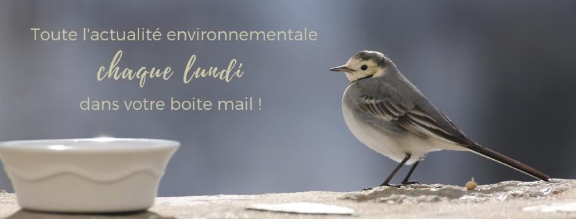 la lettre d'information d'une histoire de plumes - community manager en Gironde
