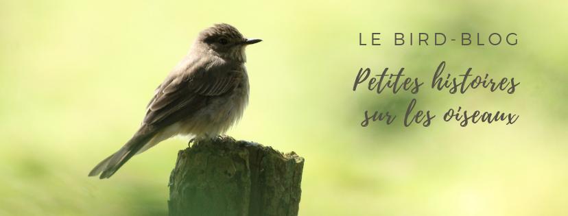 Découvrez le bird-blog, le blog d'ornithologie d'une histoire de plumes