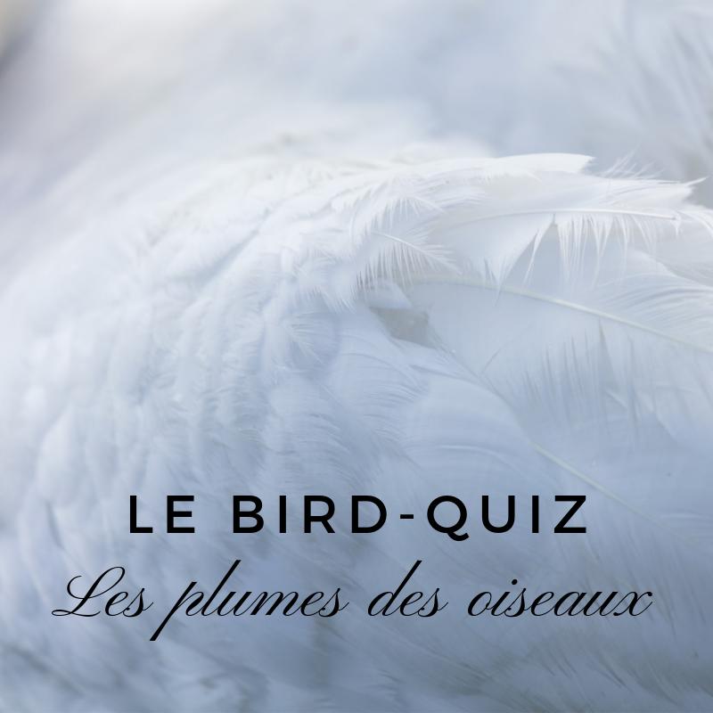 Le bird quiz - les plumes des oiseaux - nouvel article du bird-blog d'une histoire de plumes