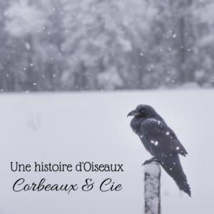 Découvrez les corvidés dans le nouvel article du Bird-Blog d'une histoire de plumes