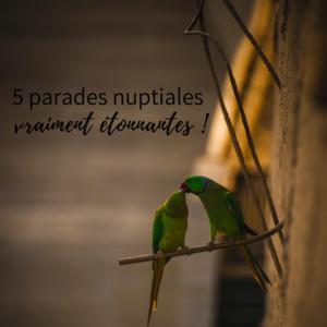 5 parades nuptiales d'oiseaux, le nouvel article du bird-blog d'une histoire de plumes