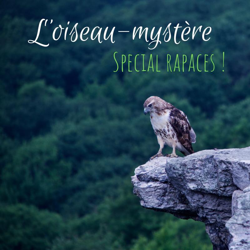 Venez deviner l'oiseau mystère dans le dernier article du Bird-Blog d'une histoire de plumes spécial rapaces !