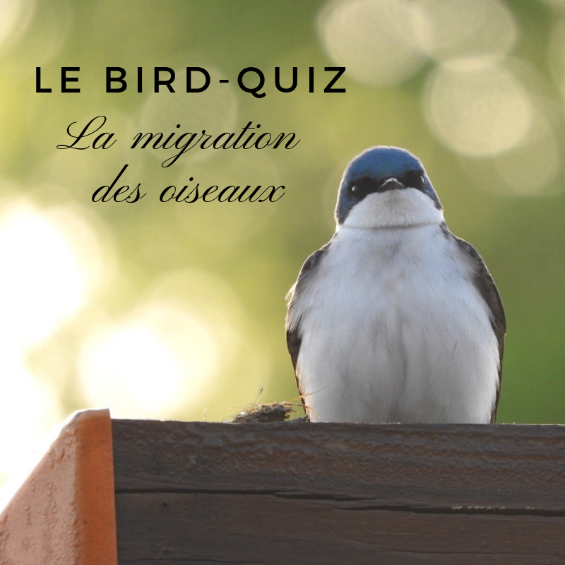 Découvrez la migration des oiseaux dans un nouveau bird-quiz du Bird-Blog d'une histoire de plumes