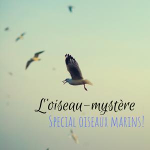 Venez deviner l'oiseau mystère dans le dernier article du Bird-Blog d'une histoire de plumes spécial oiseaux marins!