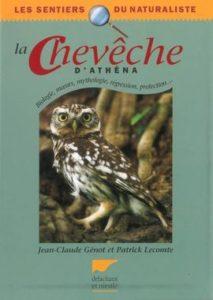 La chevêche d'athena, une monographie d'oiseau, un nouvel article du Bird-Blog d'Une histoire de plumes