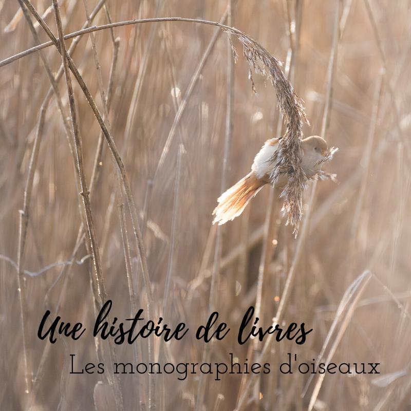 Découvrez les monographies des oiseaux avec le nouvel article du bird-blog d'Une histoire de plumes