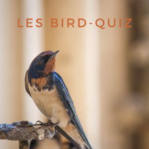 Apprenez-en plus sur les oiseaux en vous amusant avec les bird-quiz d'une histoire de plumes