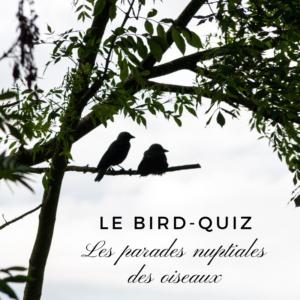 Apprenez-en plus sur les parades nuptiales des oiseaux grâce à ce nouveau bird-quiz d'une histoire de plumes