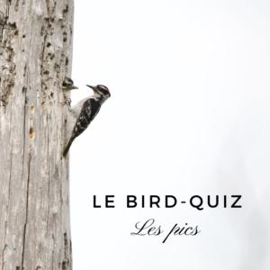 Bird quiz - les pics - le dernier article du bird-blog d'Une histoire de plumes