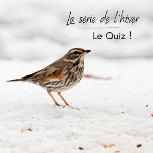 la série de l'hiver, Le Quiz ! Un nouvel article du bord-blog d'une histoire de plumes
