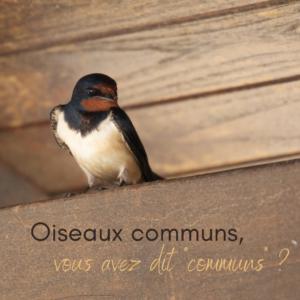 Les oiseaux communes, sujet du dernier article du bird-blog d'une histoire de plumes