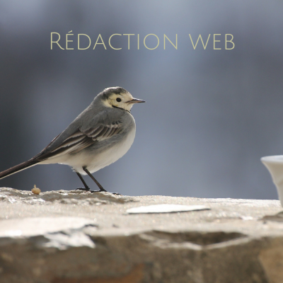 Parce que la rédaction de textes à destination du web répond à certains codes, notamment en matière de référencement, Une histoire de plumes propose de rédiger votre article/billet de blog de vulgarisation scientifique mais également vos textes sur votre site web.