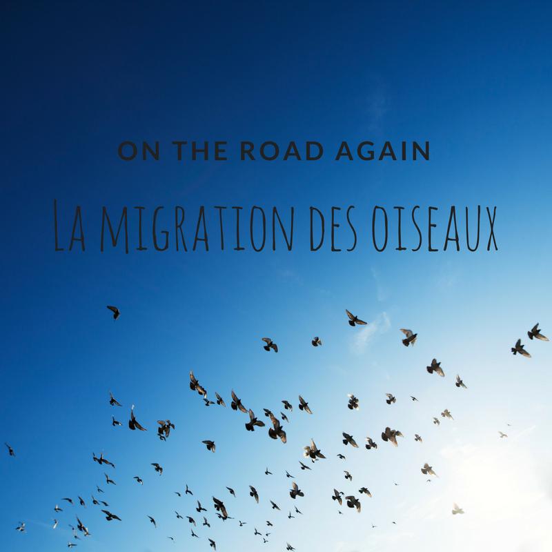 La migration des oiseaux