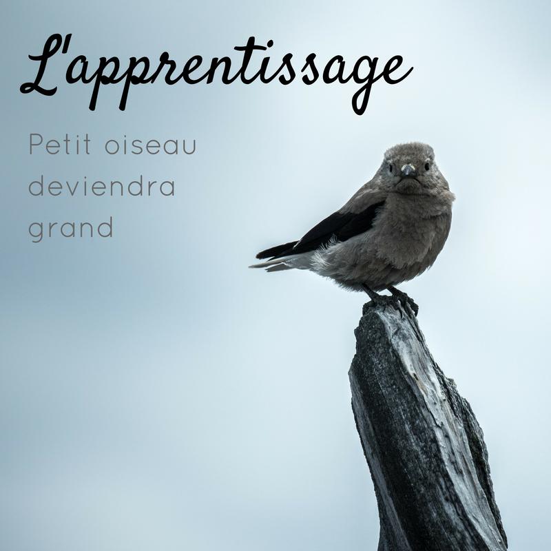 L'apprentissage: comment un jeune oiseau apprend à être adulte