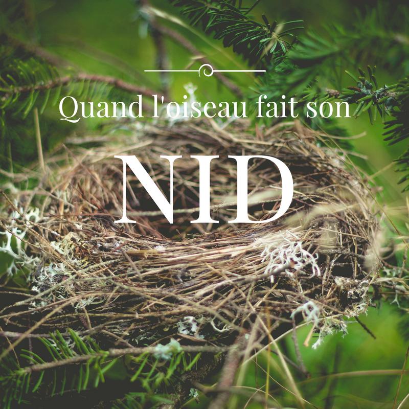 le nid des oiseaux