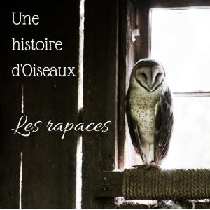Une histoire d'oiseaux: les rapaces