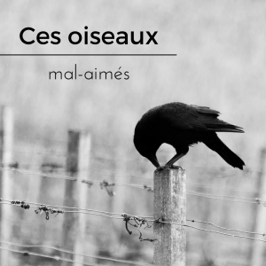 vautour, corbeau, effraie des clochers, pie bavarde: ces oiseaux mal-aimés