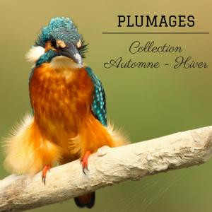 les plumages des oiseaux en automne et en hiver