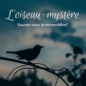 Oiseau-mystère: saurez-vous le reconnaître?
