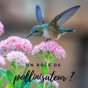 Calendrier de l'avent, jour 1! Les oiseaux sont-ils des pollinisateurs?