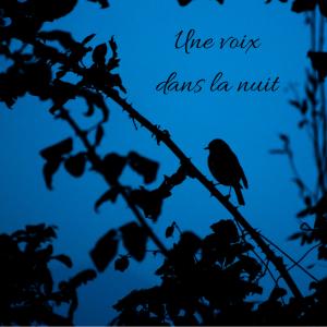 Jour 12 du calendrier de l'avent d'une histoire de plumes: Les oiseaux chantent-ils la nuit?