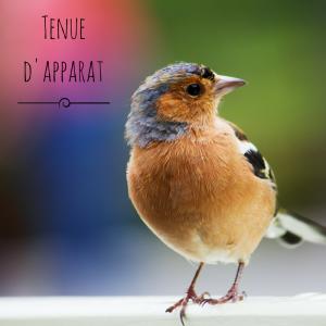 Jour 4 du calendrier de l'avent d'une histoire de plumes: le plumage nuptial des oiseaux