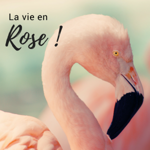 Jour 5 du calendrier de l'avent d'une histoire de plumes: le plumage rose des flamants roses
