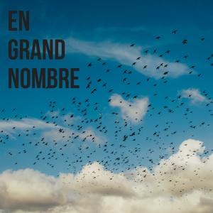 Jour 7 du calendrier de l'avent d'une histoire de plumes: quel est l'oiseau le plus abondant du monde?