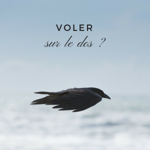 Jour 9 du calendrier de l'avent d'une histoire de plumes: les oiseaux peuvent-ils voler sur le dos?