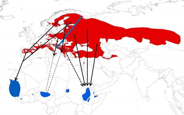 Les différentes voies de migration du Bruant ortolan