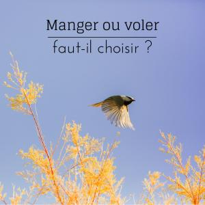 Jour 16 du calendrier de l'avent d'une histoire de plumes: les oiseaux peuvent-ils manger en volant?