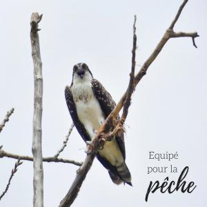 Jour 17 du calendrier de l'avent d'une histoire de plumes: Comment les oiseaux pêcheurs saisissent-ils leurs proies?