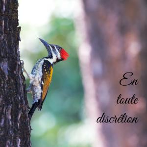 Jour 19 du calendrier de l'avent d'une histoire de plumes: qu'est-ce qu'un oiseau cavicole?